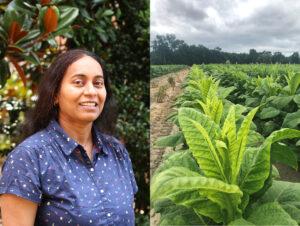 Portrait photo of Swarnalatha Moparthi and a tobacco field